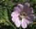 digitalbilder-014-Pollenbad